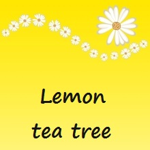Lemon tea tree Saloos